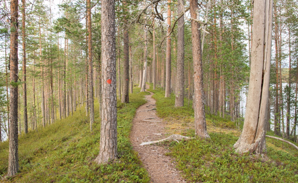 Kainuu Trail Run